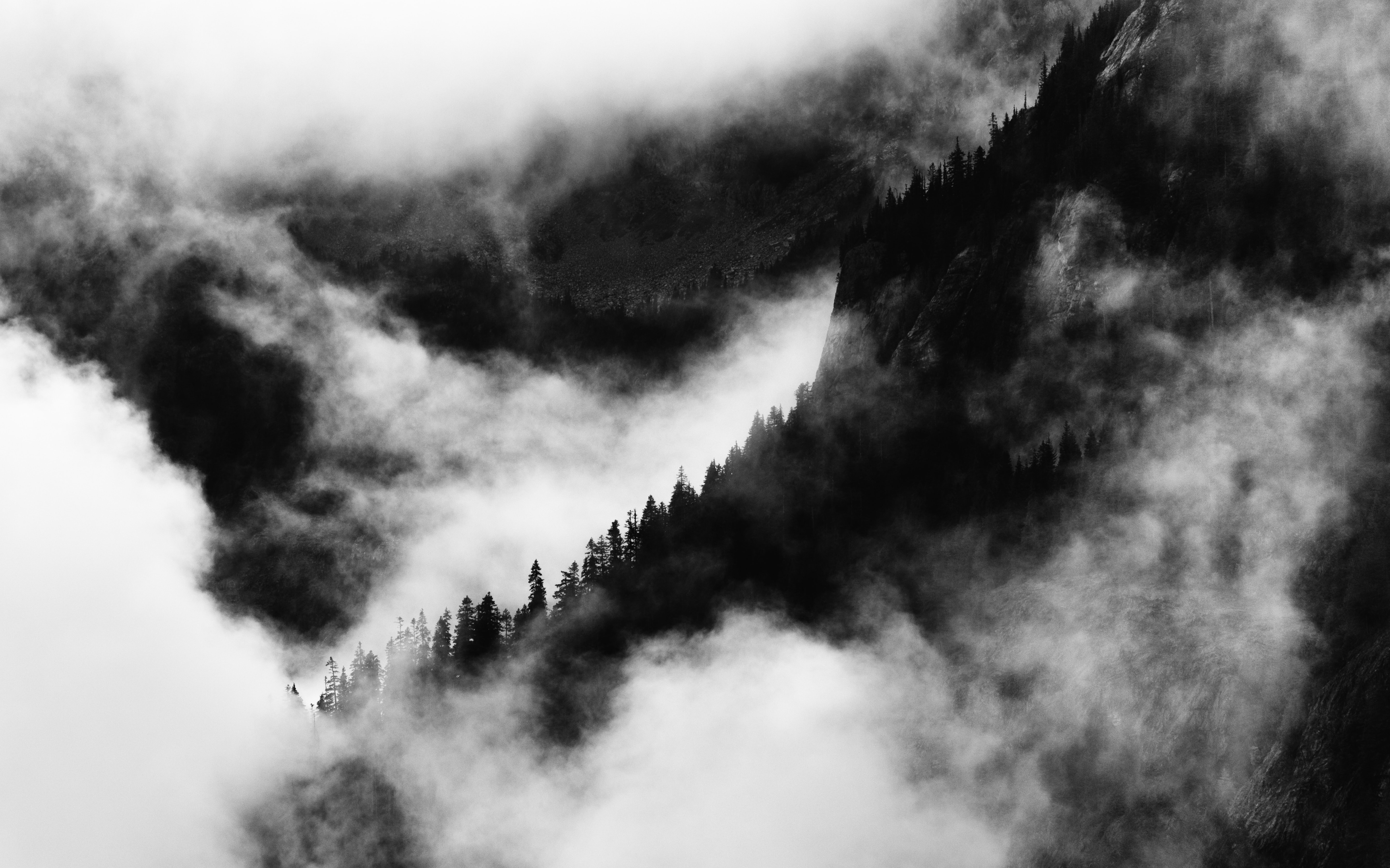 trees on mountains covered with cloud