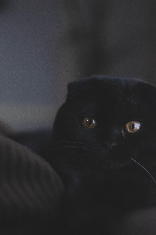photo of black cat lying on black textile