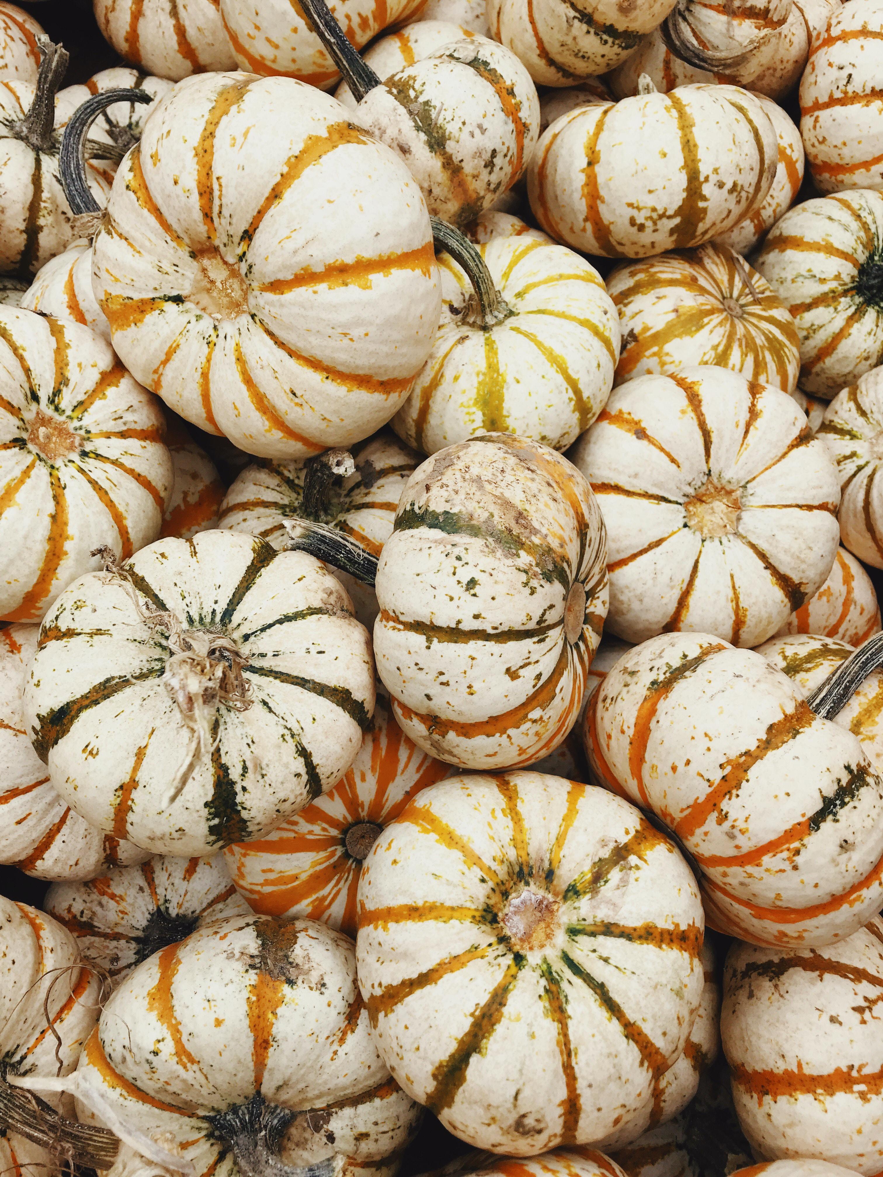 beige pumpkins