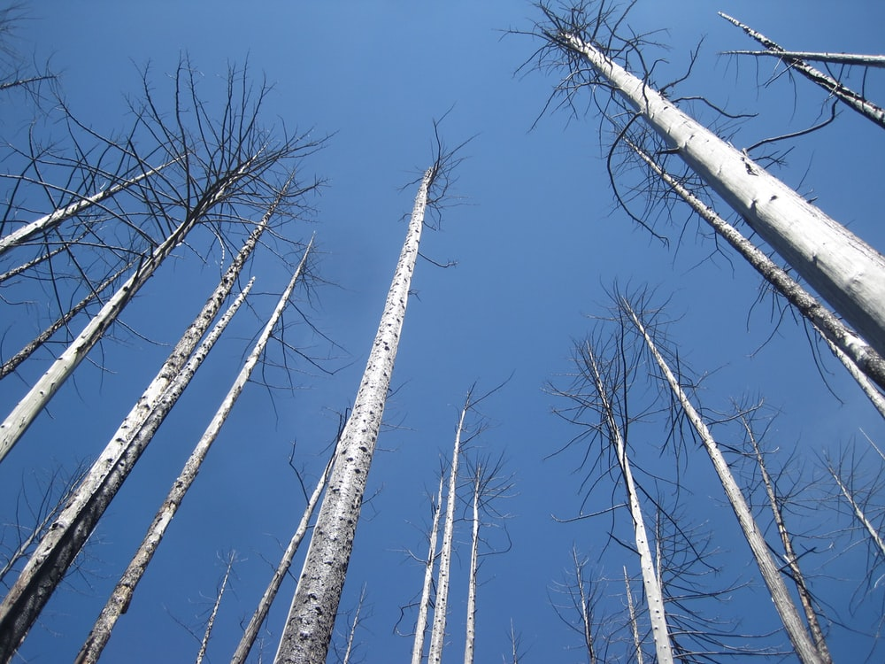 low-angle photography of bare trees