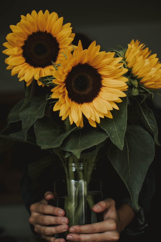 three yellow sunflowers centerpiece