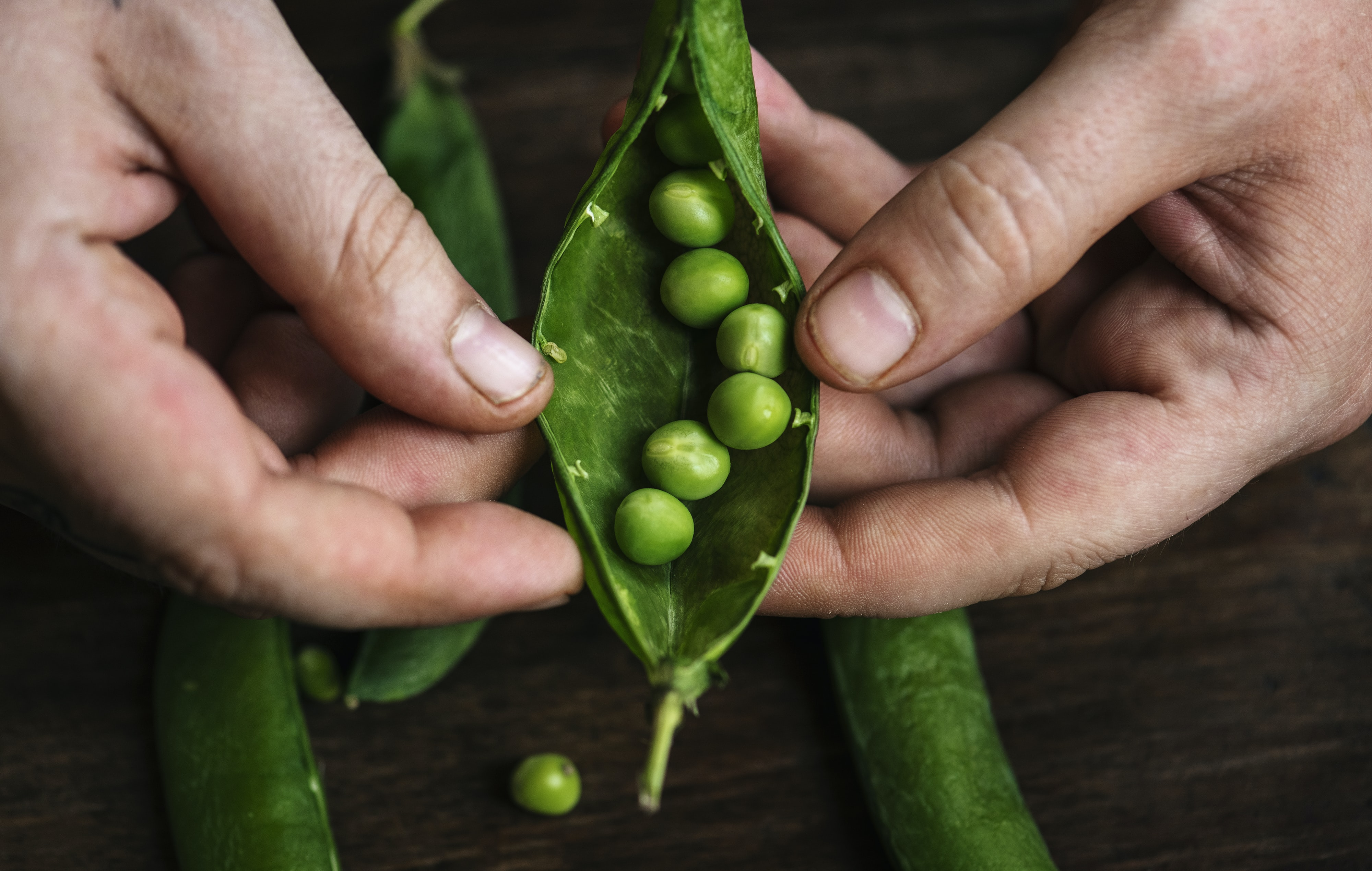 person holding beans