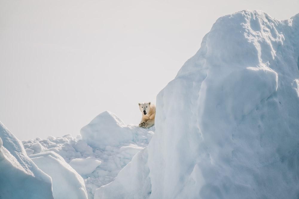 polar bear laying on ice at daytime