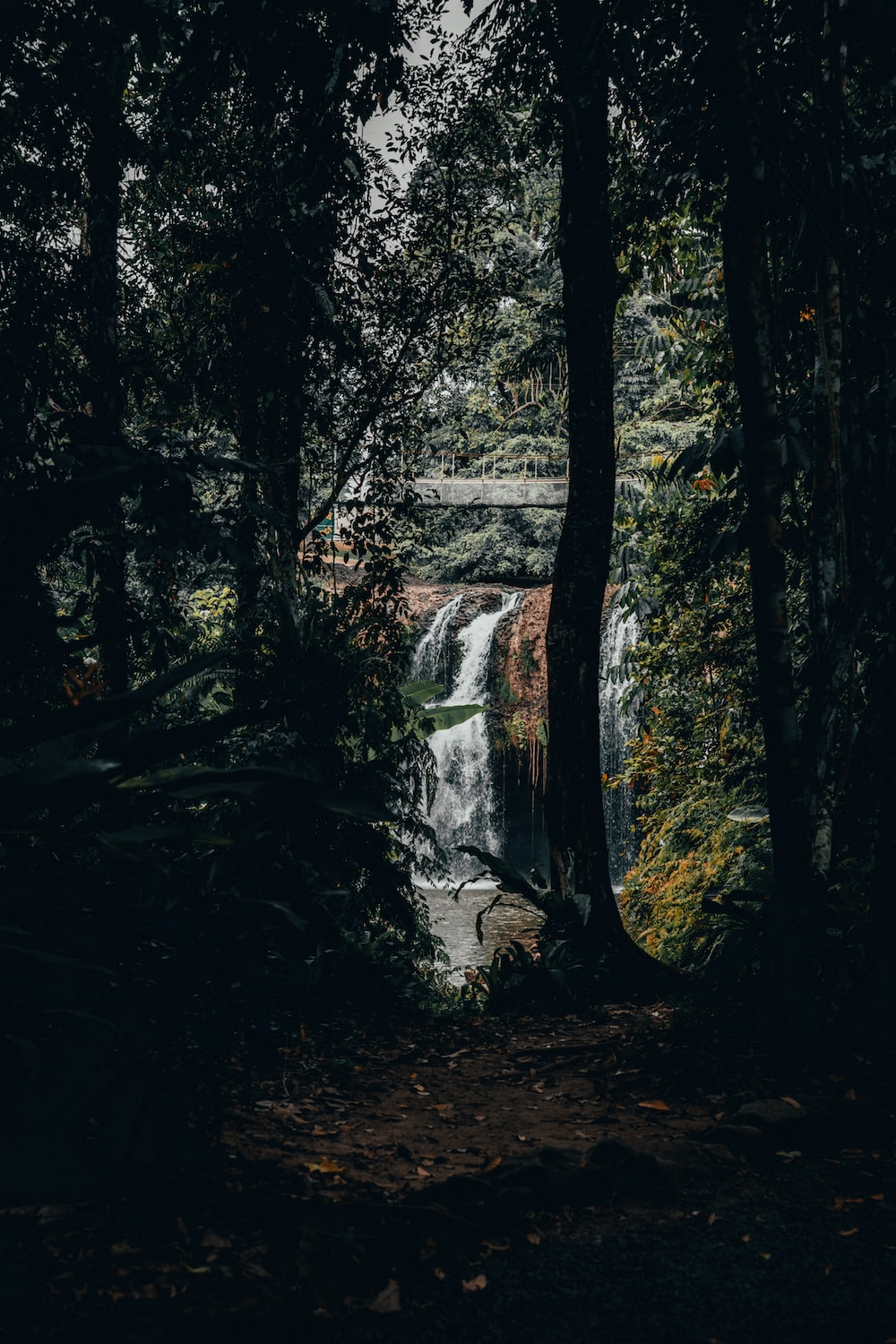 view of waterfalls through forest trees