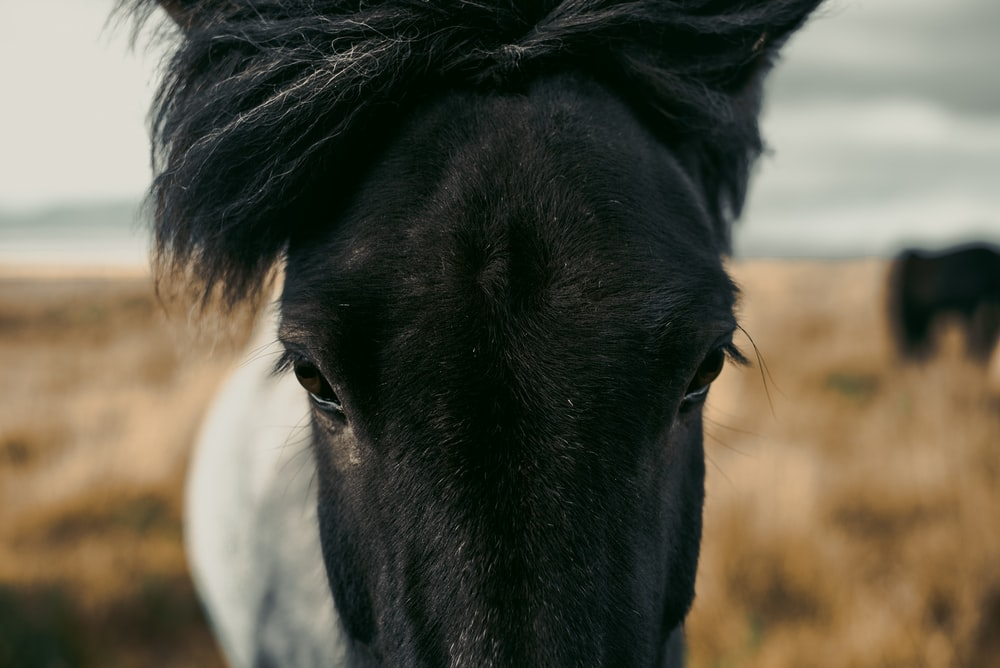 black and white horse