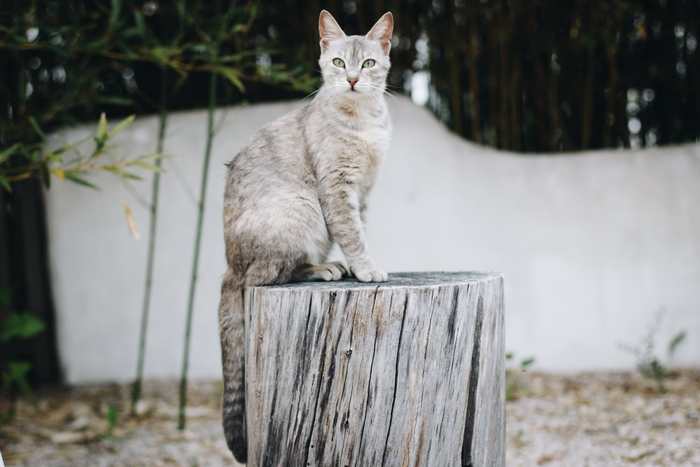 selective focus photography of cat resting on wood log