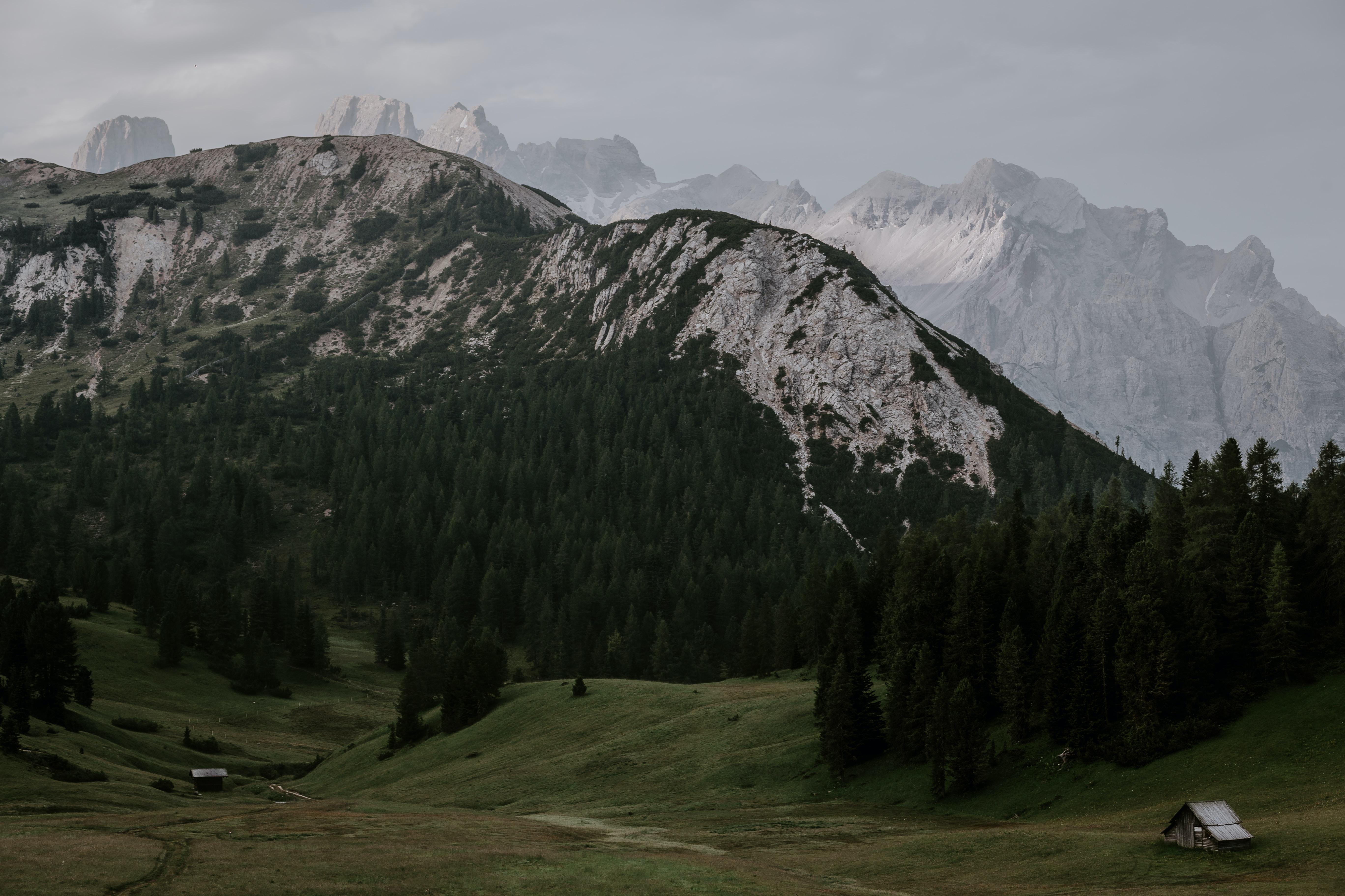 forest under glacier mountains