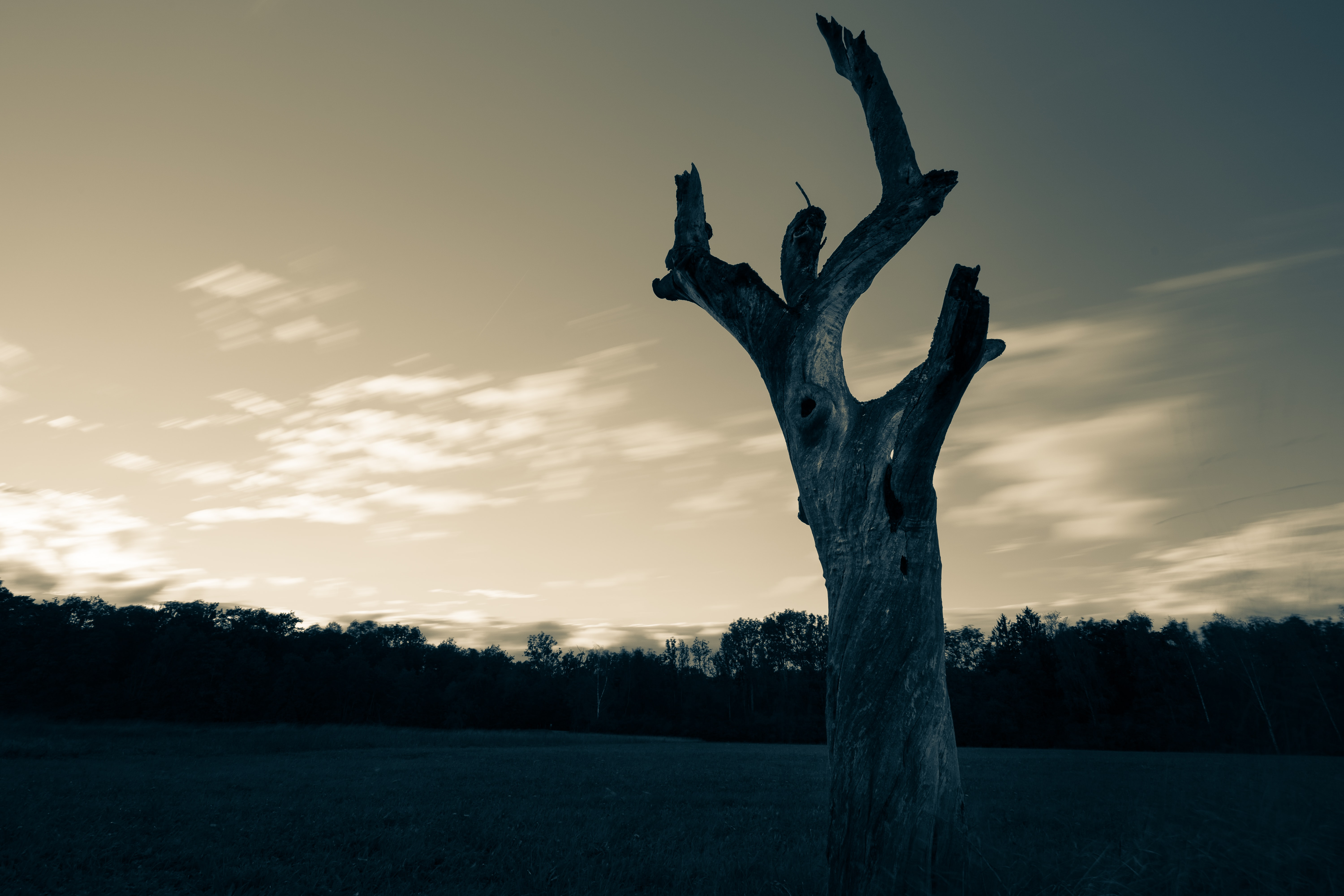 brown tree trunk during dusk
