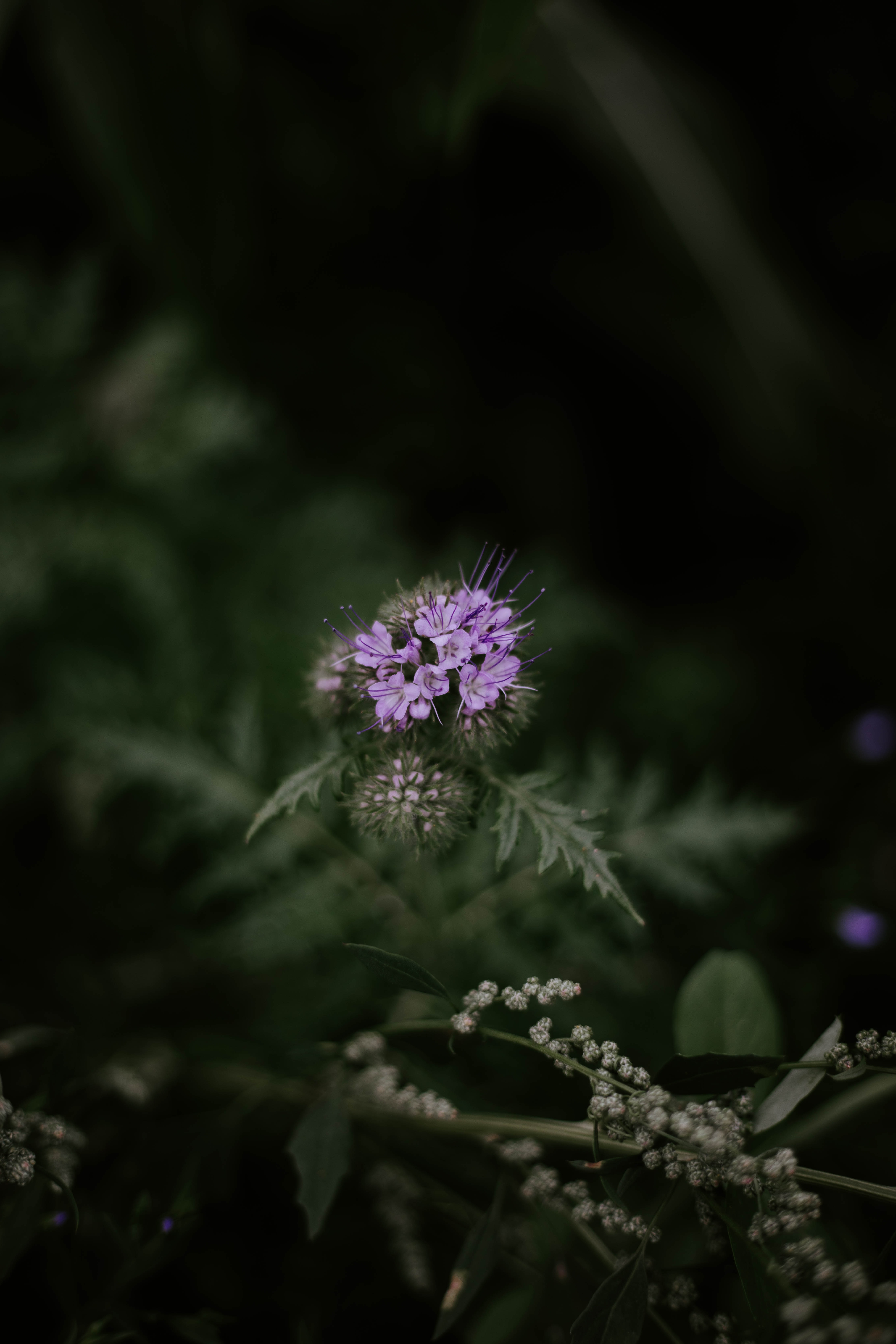 purple petaled flower in bloom