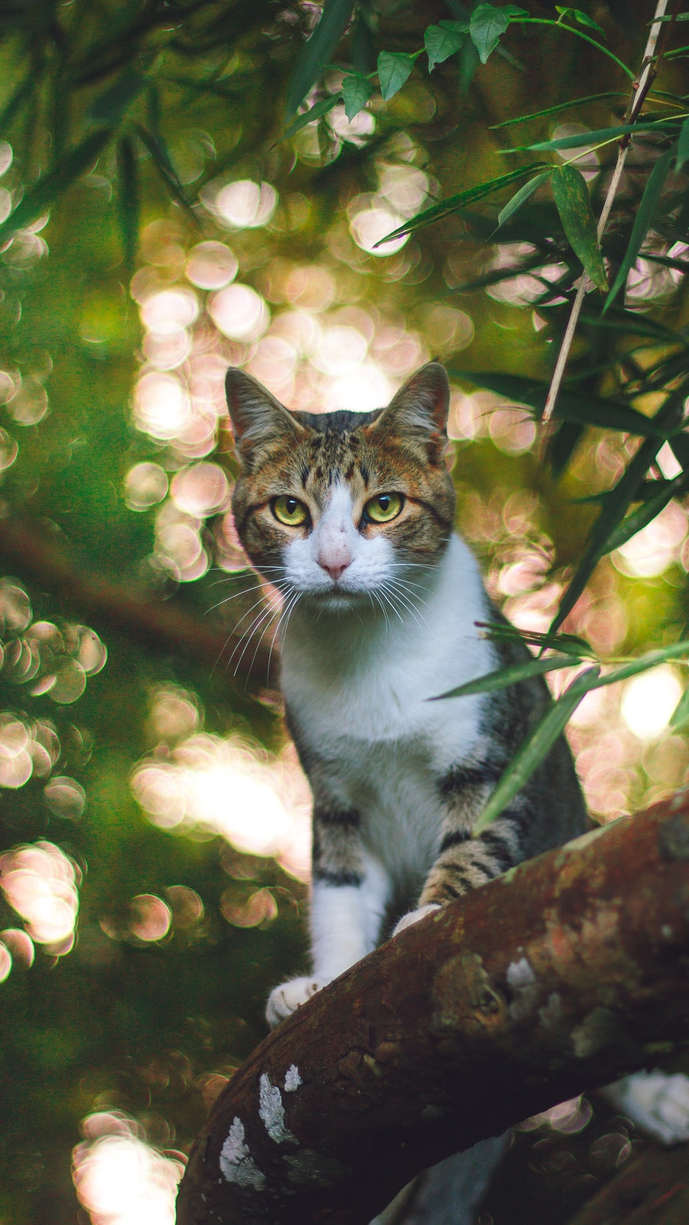 brown and black tabby cat standing on tree branch
