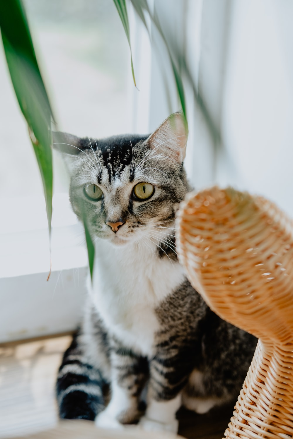 selective focus photography of cat beside glass pane during daytime