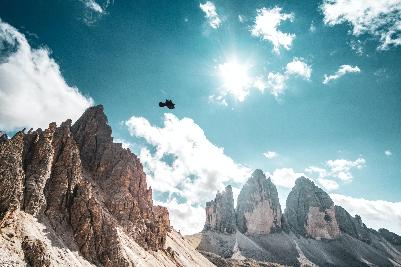 flight of bird above brown mountain