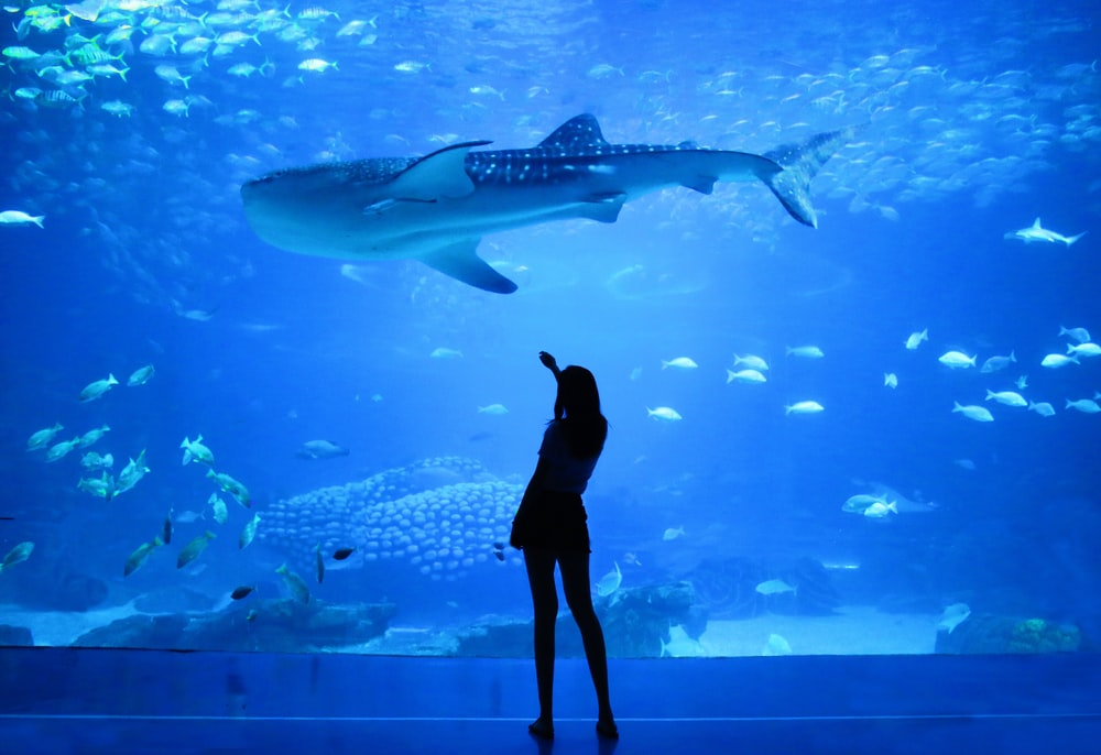 silhouette of woman beside aquarium with whale shark