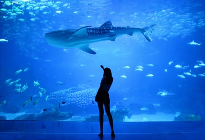 silhouette of woman beside aquarium with whale shark aquarium zoom background