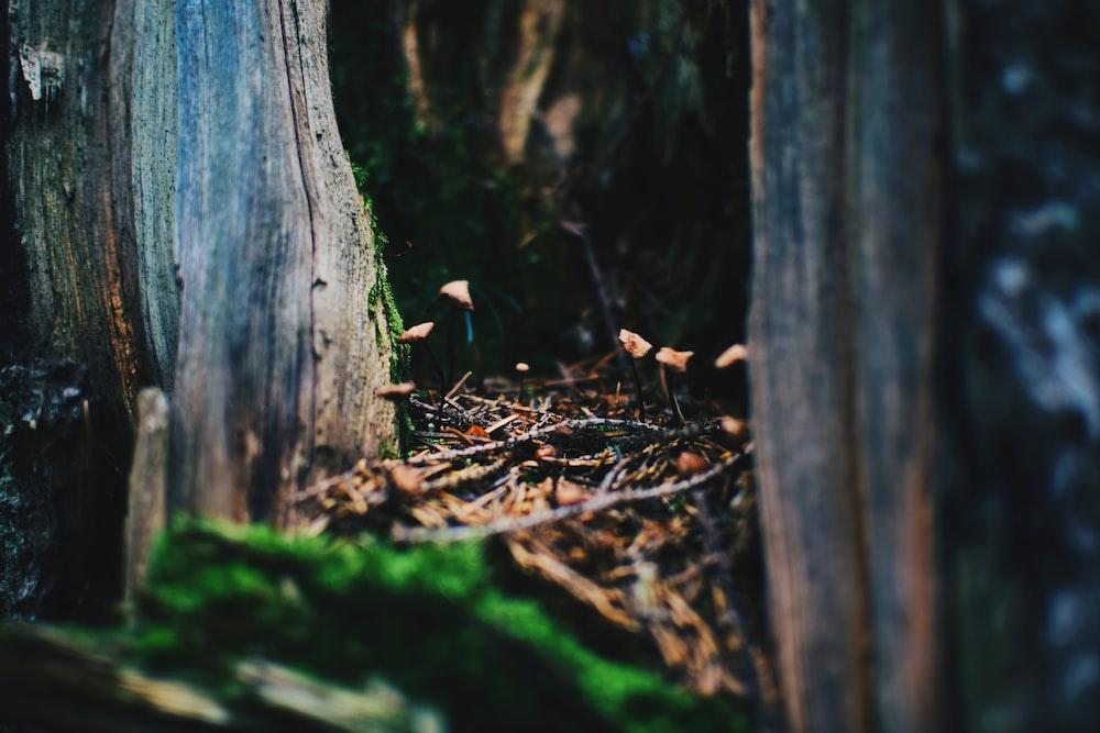 selective focus of brown wooden tree
