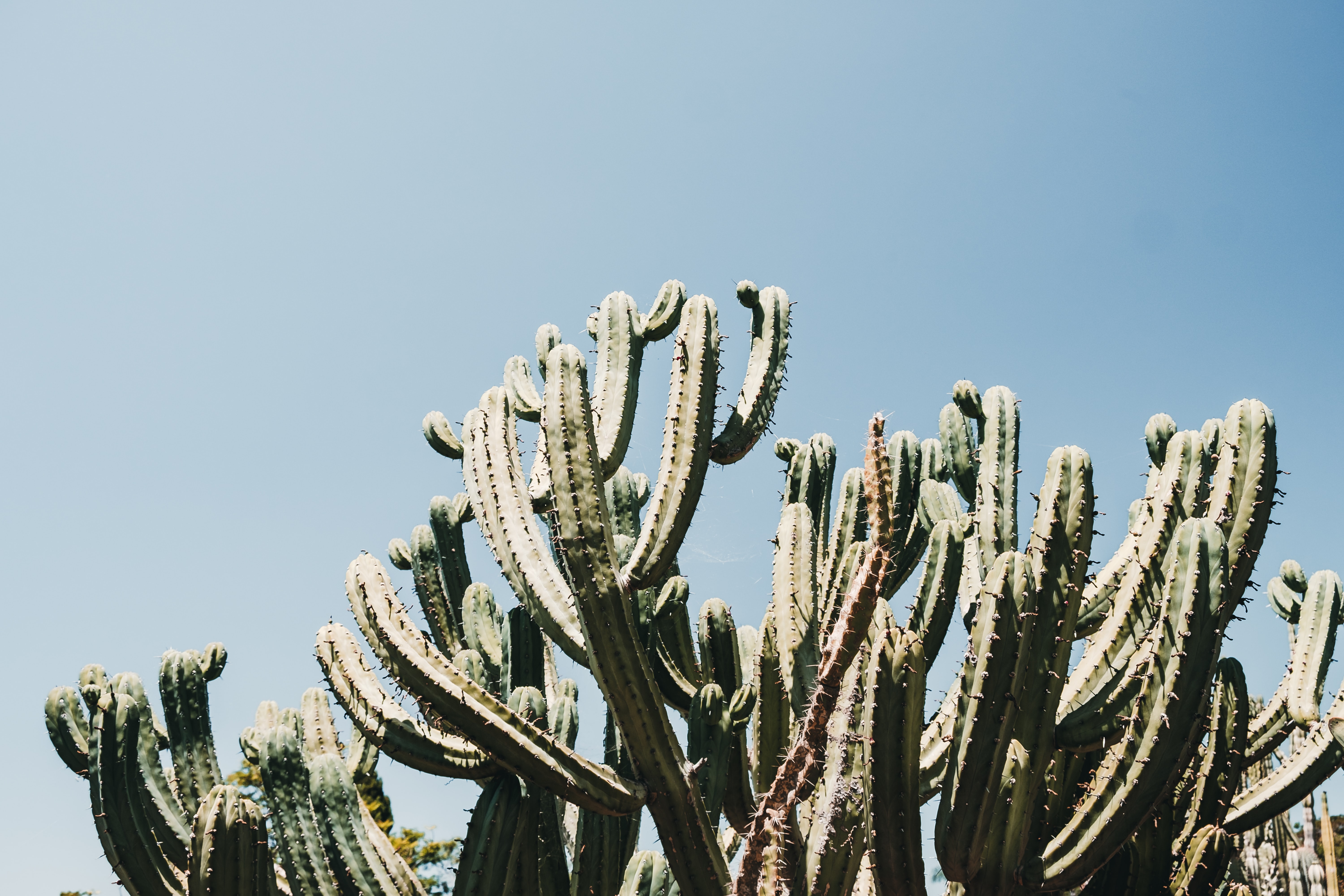 low angle photo of saguaro cactus at daytime