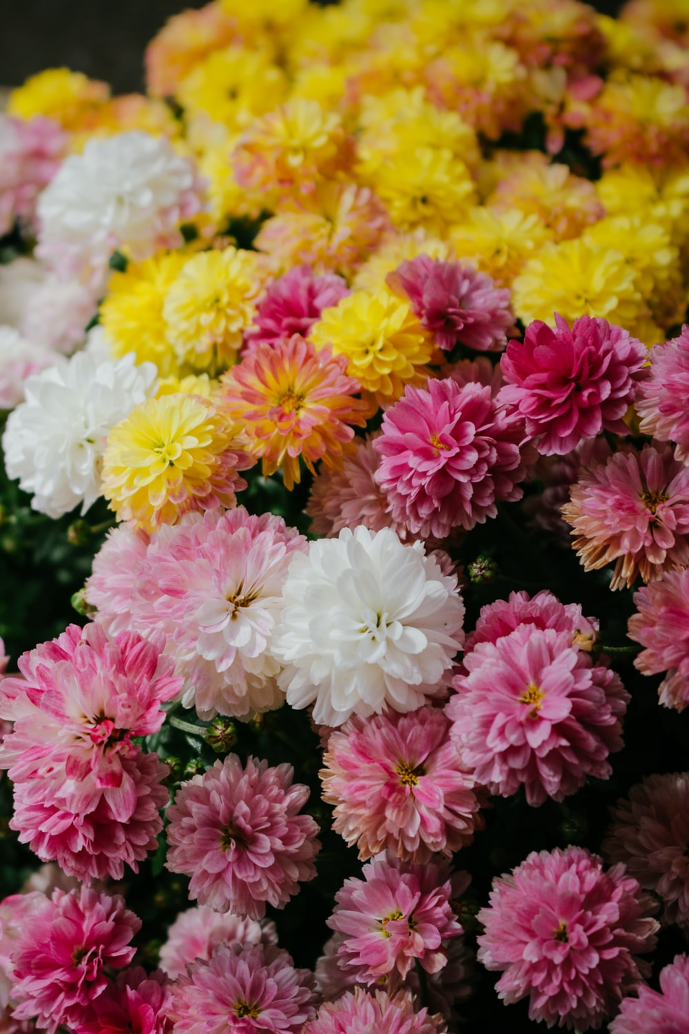 Pink yellow and white flowers photo by ibrahim rifath photoripey pink yellow and white flowers photo by ibrahim rifath photoripey on unsplash mightylinksfo