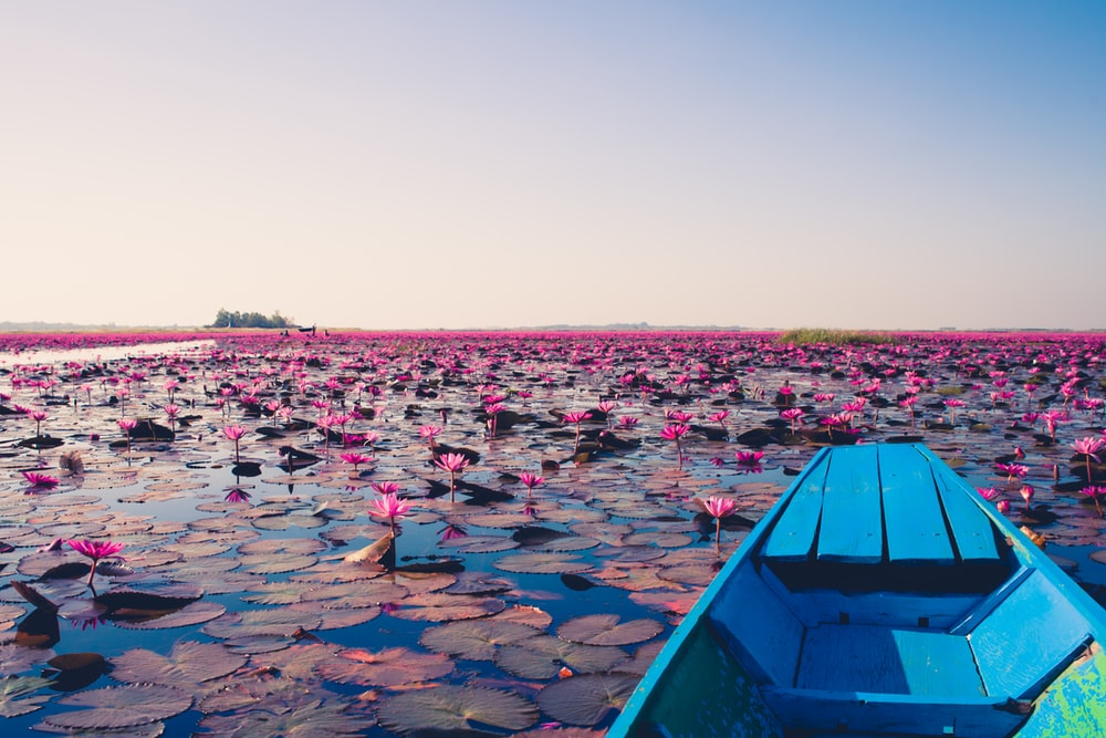 blue jon boat on body of water with lily flowers during daytime