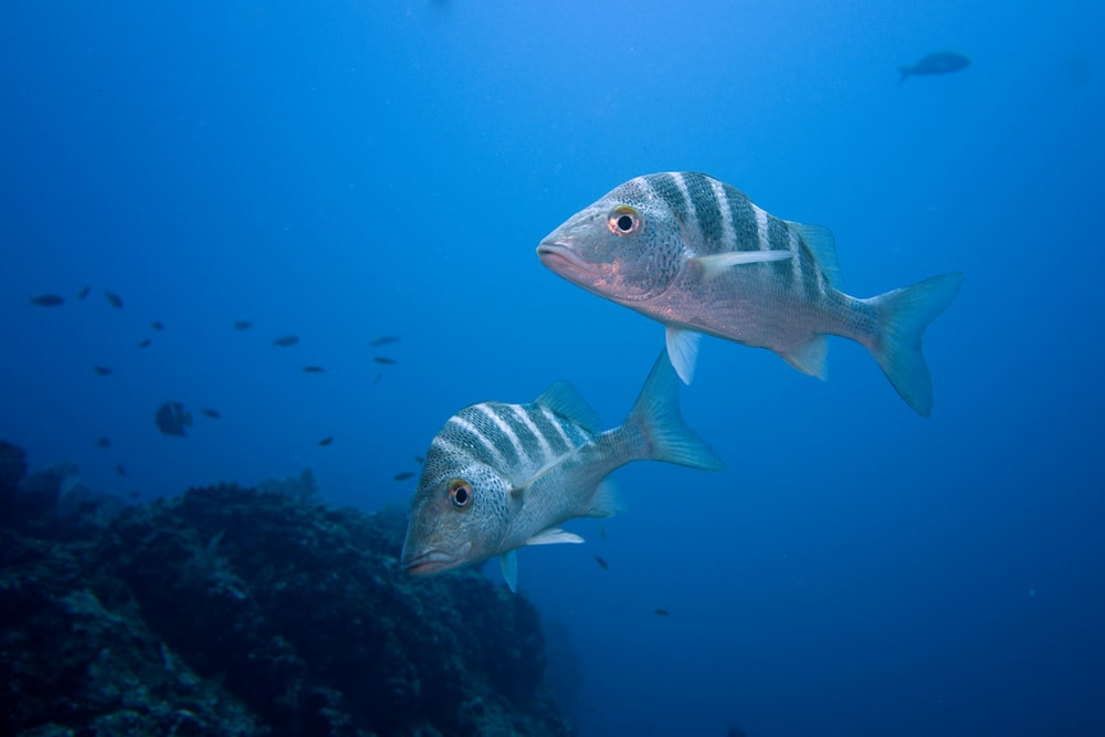 shallow focus photography of fishes