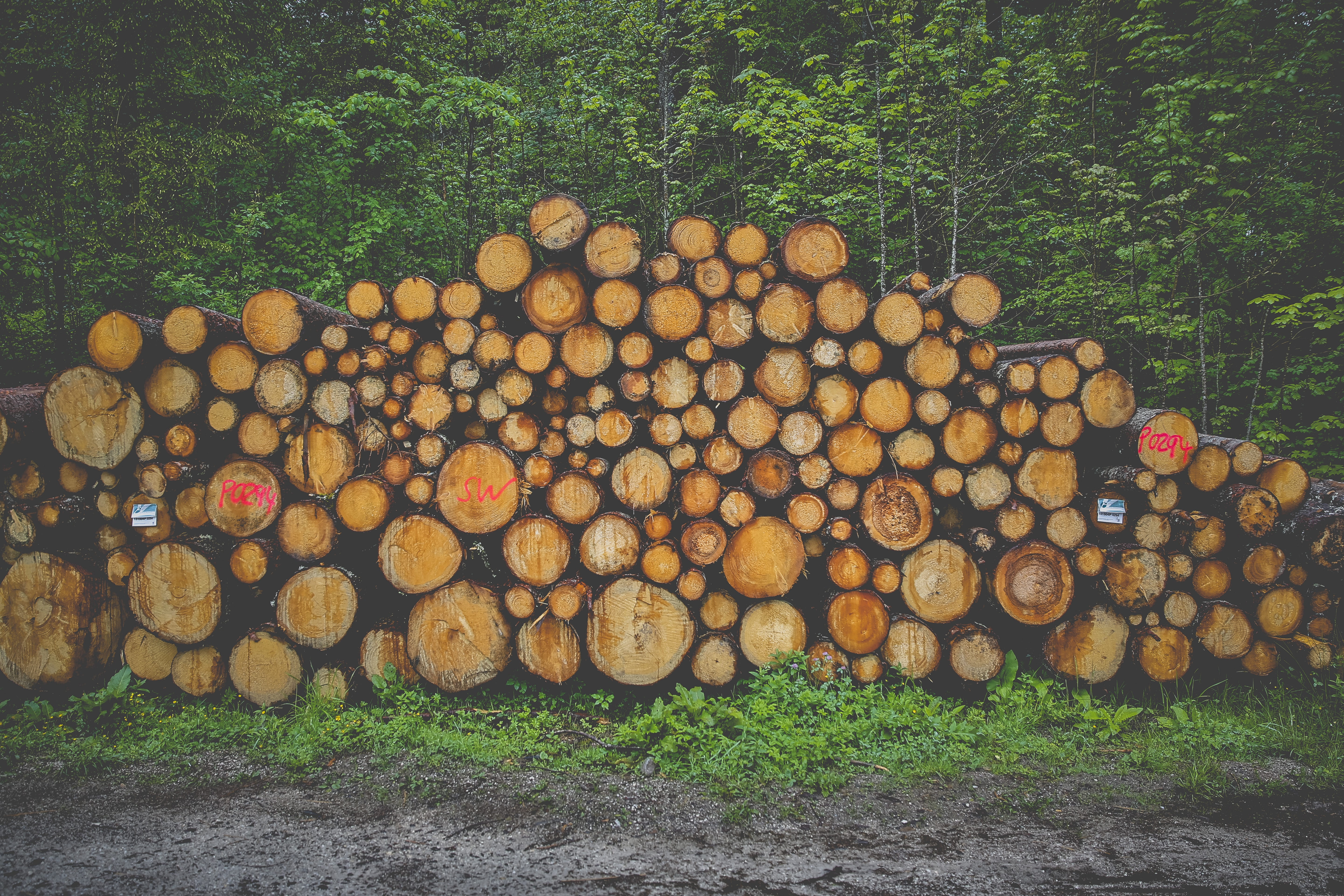 pile of logs near trees