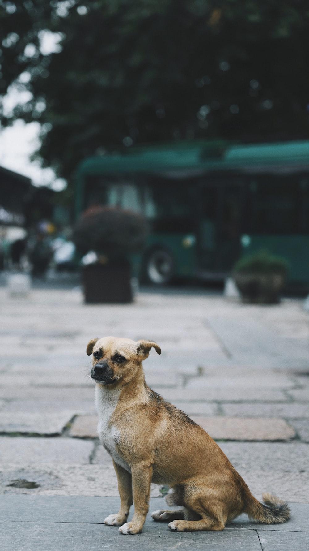 brown dog on floor during daytime