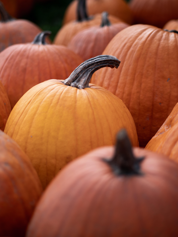 selective focus photography of bunch of pumpkins