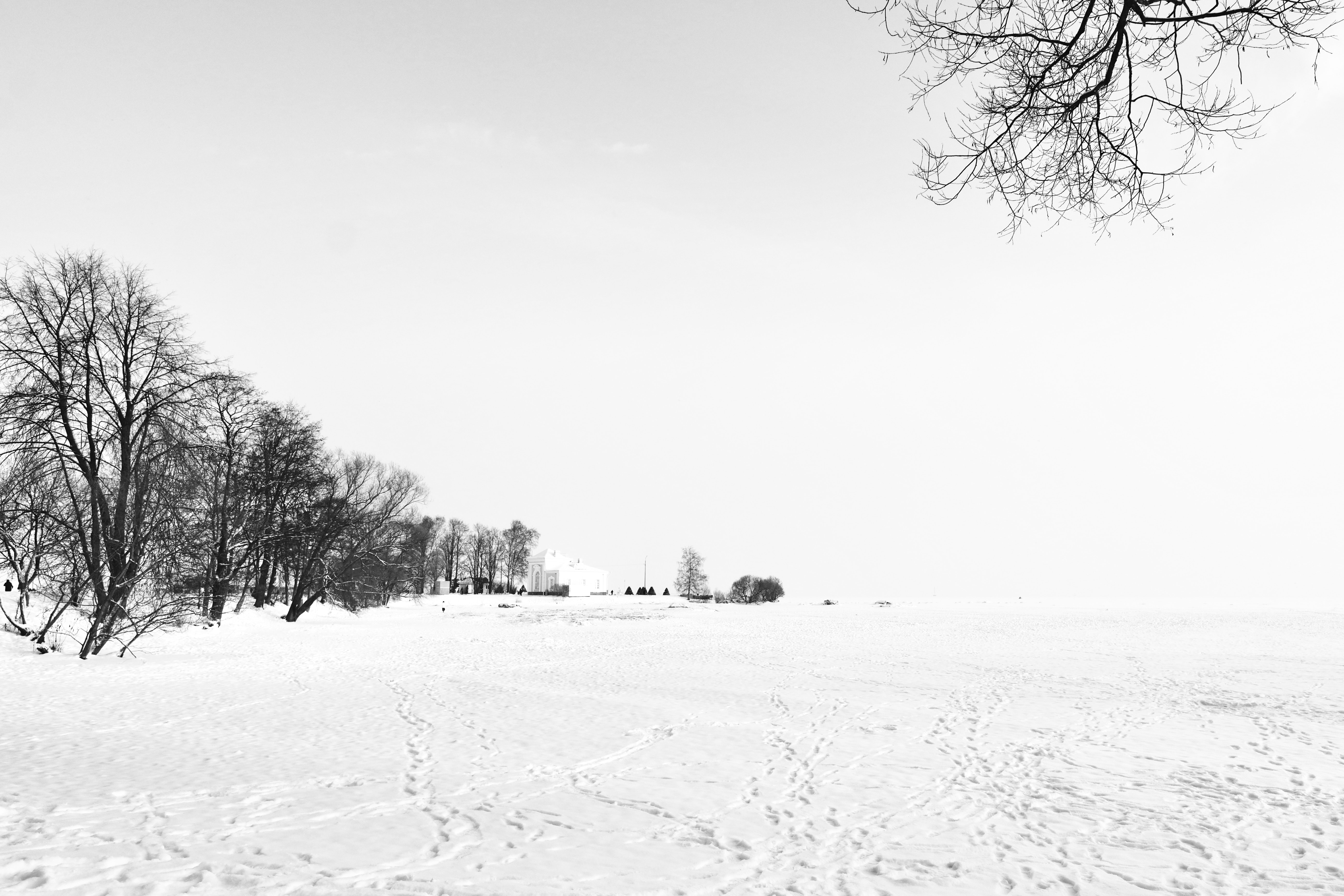 trees surrounded by snowfield