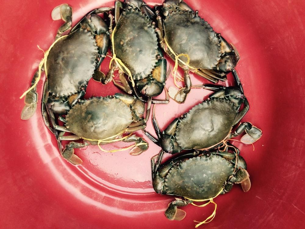 six crabs in bucket