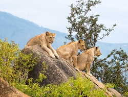 Fahrt zum Tsavo Nationalpark