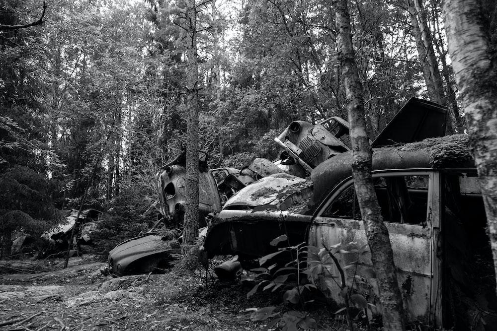 wrecked cars near trees