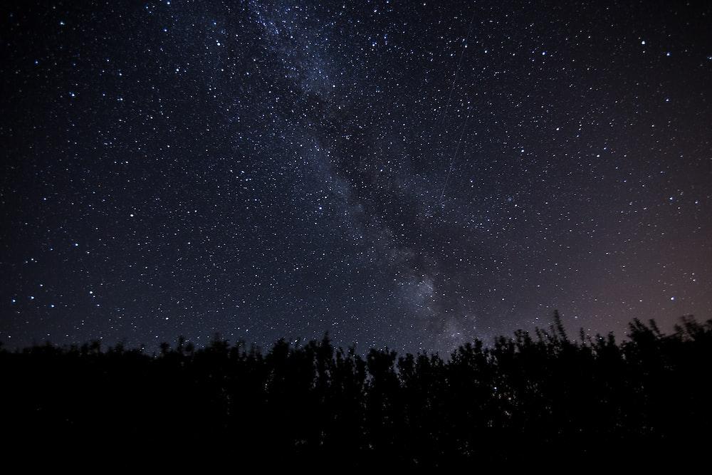 trees under stars at night