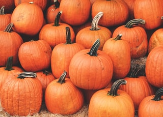 orange pumpkin on brown grass