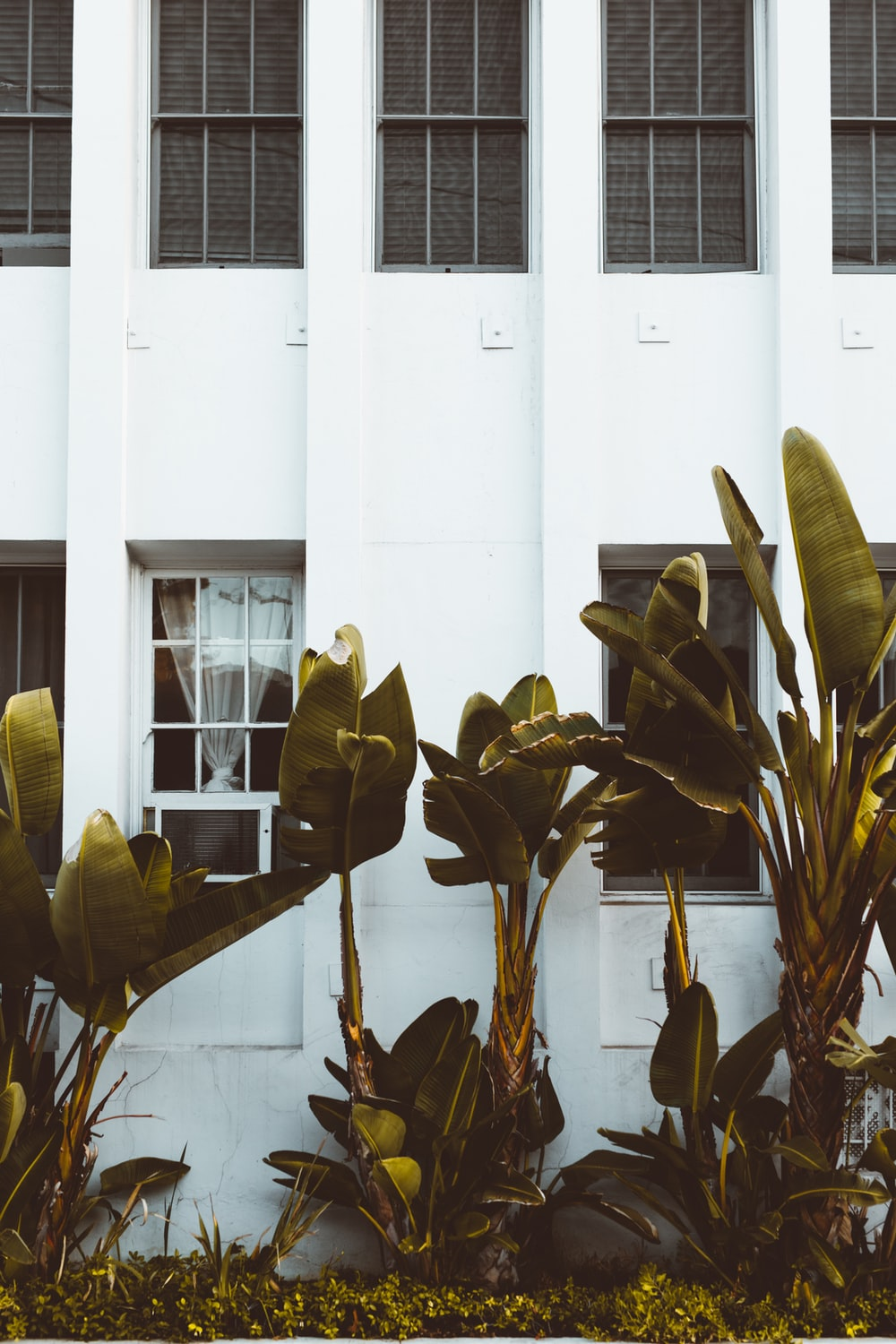 green leafed plants near white concrete building wall partition