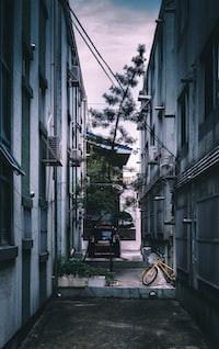 pine tree in between two buildings