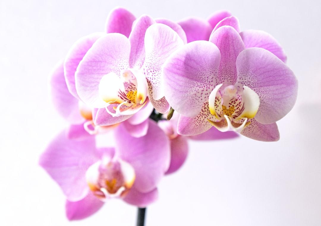 Resultado de imagem para orchid unsplash