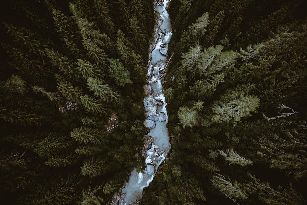 bird's-eye view of river in between trees