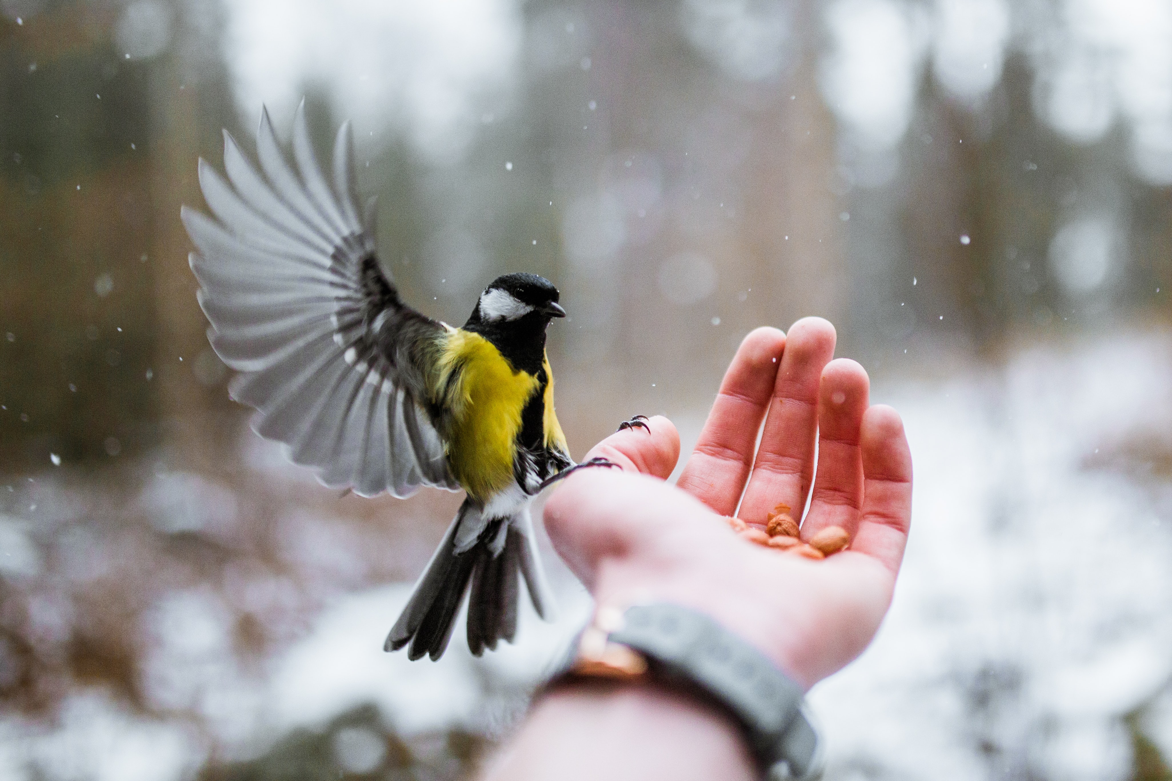 yellow and gray bird on person's hand