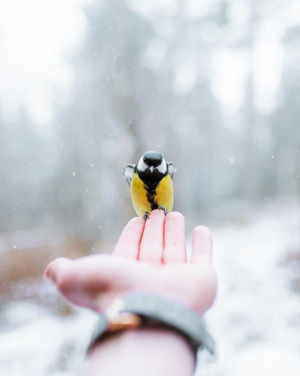 black and yellow bird