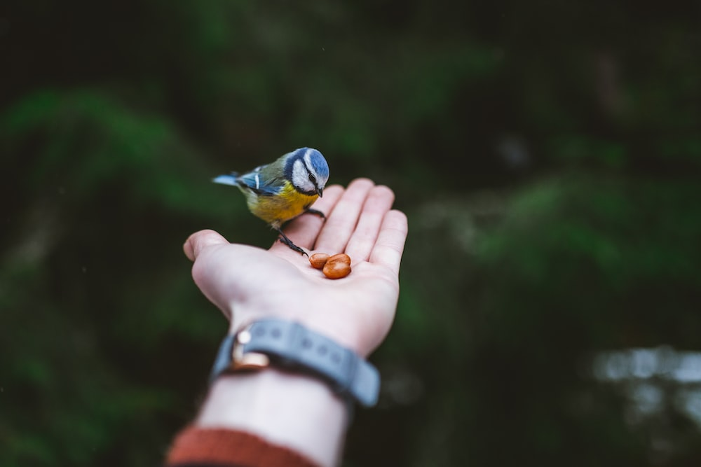 bird perched on person's palm