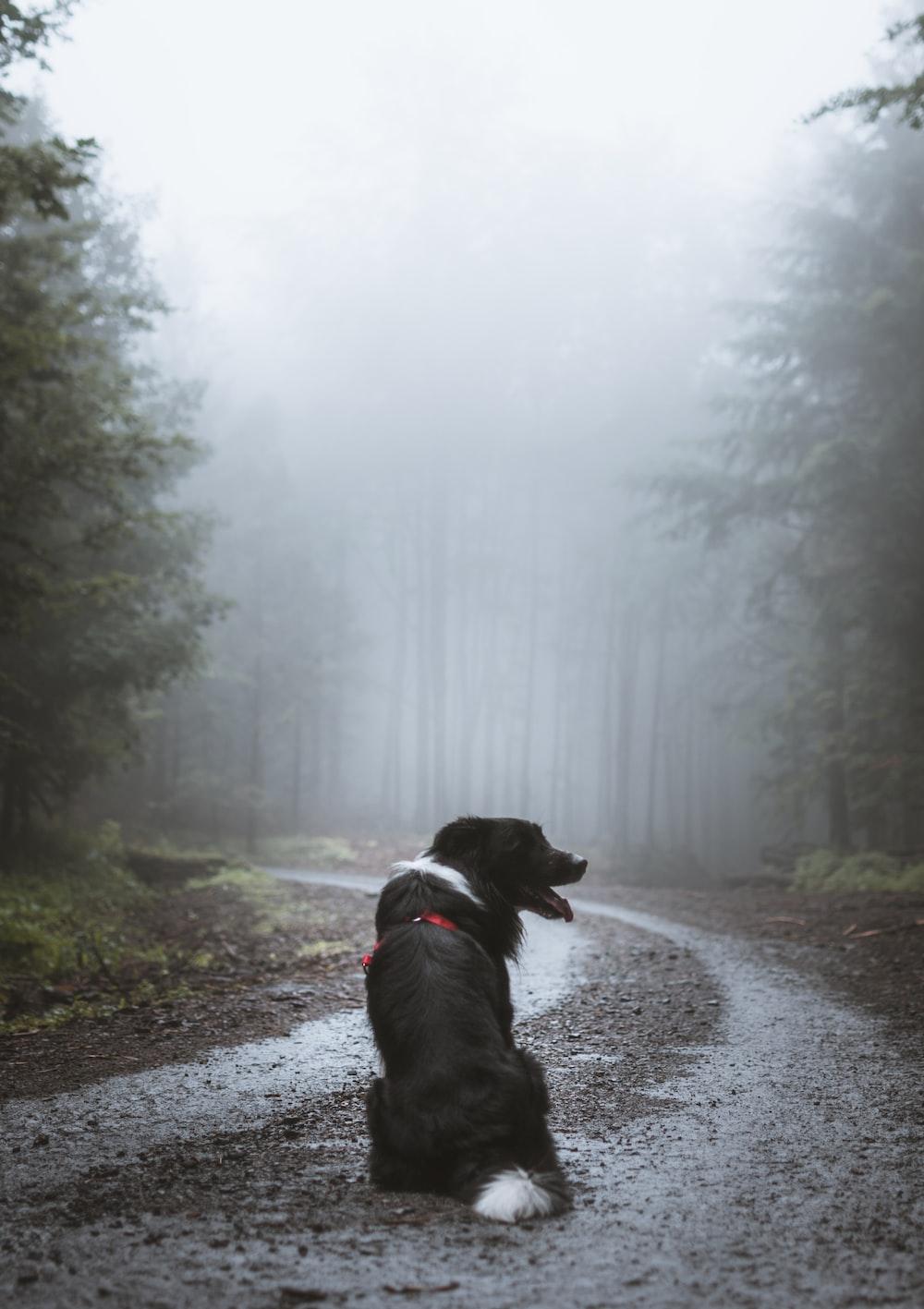 dog on empty road