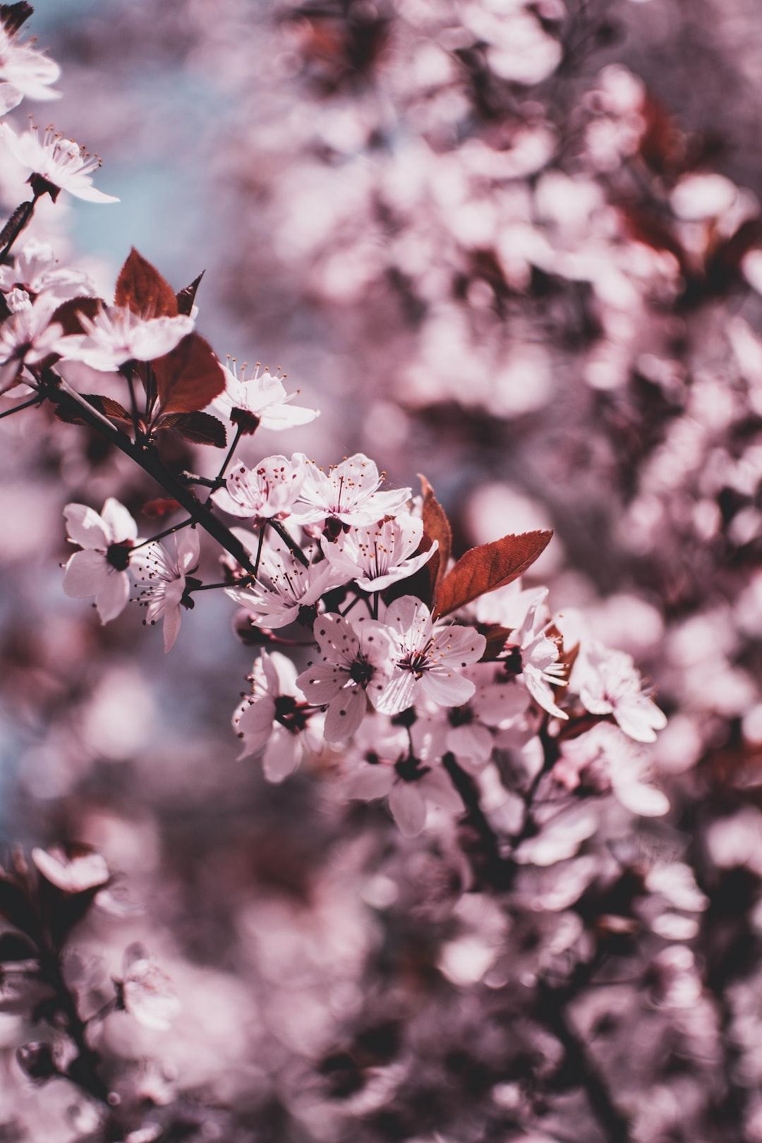 3934. Virágok