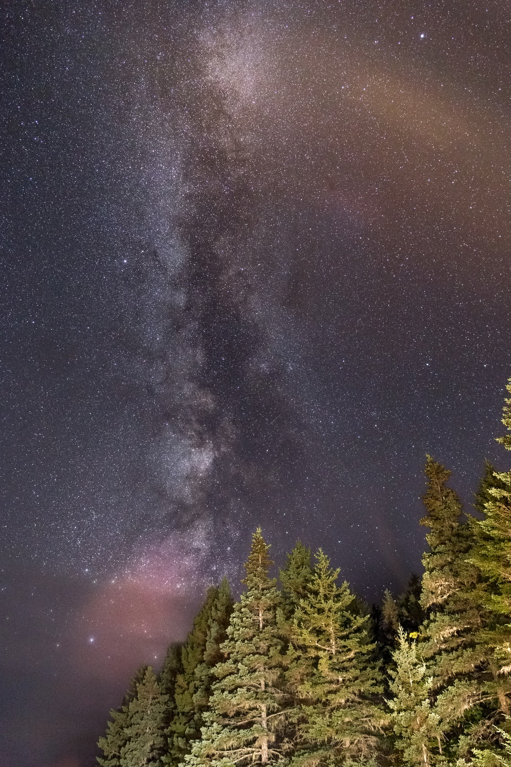 low-angle photo of pine trees during starry night