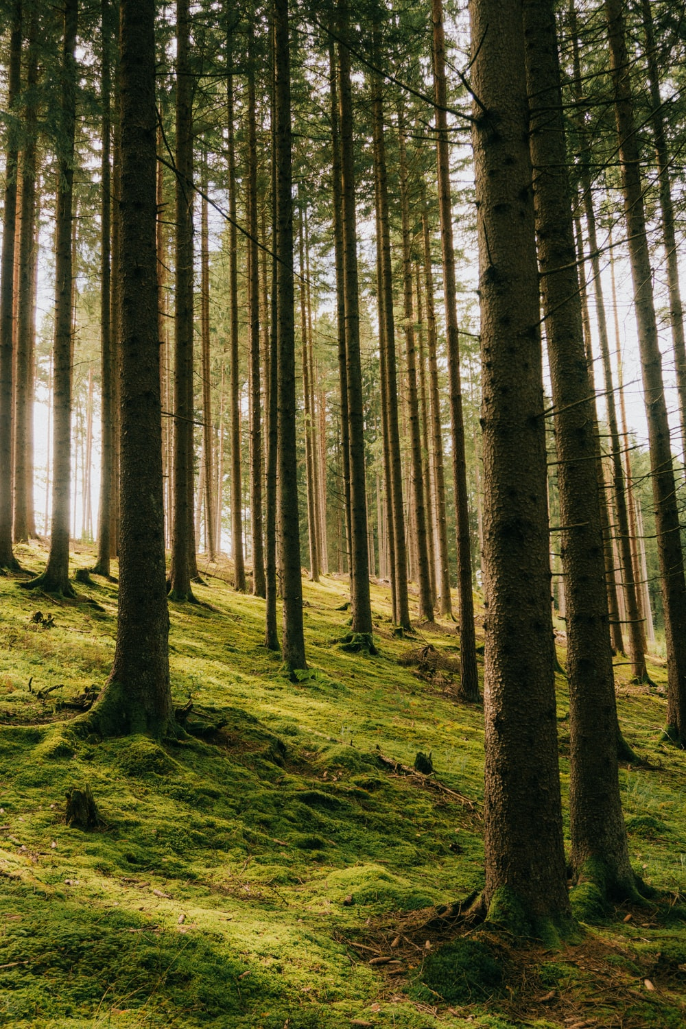 green leafed forest trees