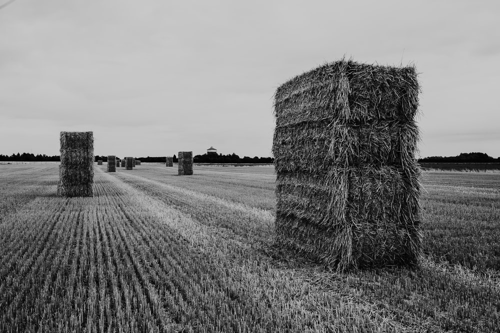 grayscale photography of hay bales on field