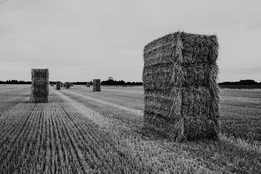 hay in a farmers field