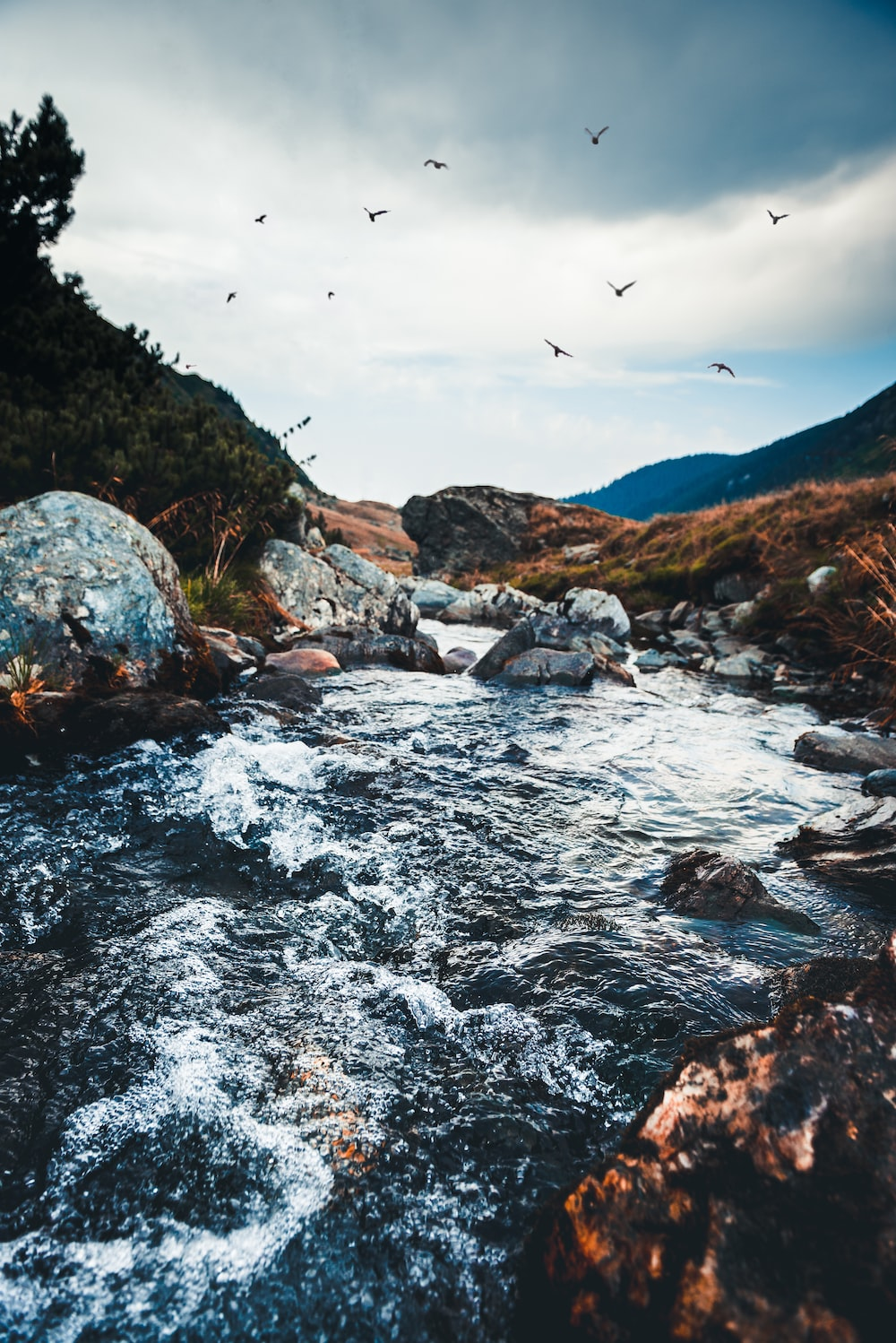 river surrounded by rocks