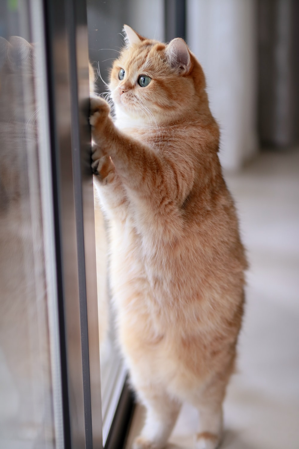 orange tabby cat leaning on glass slide door