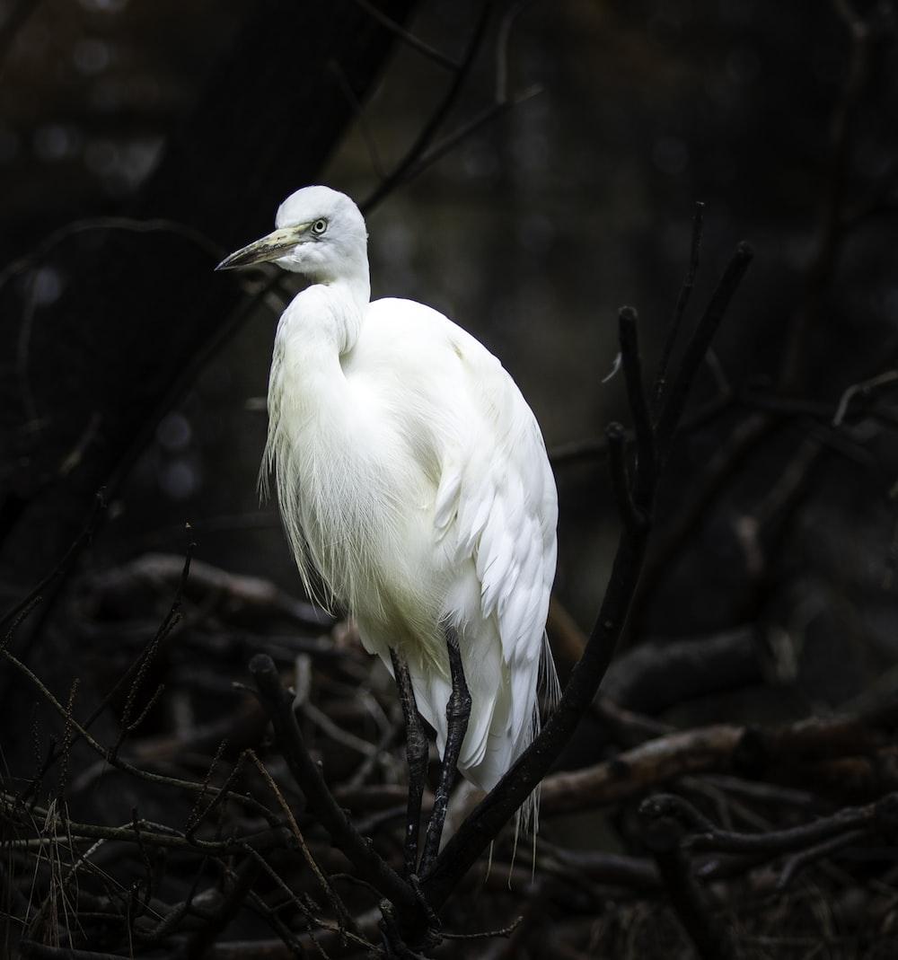 white bird standing