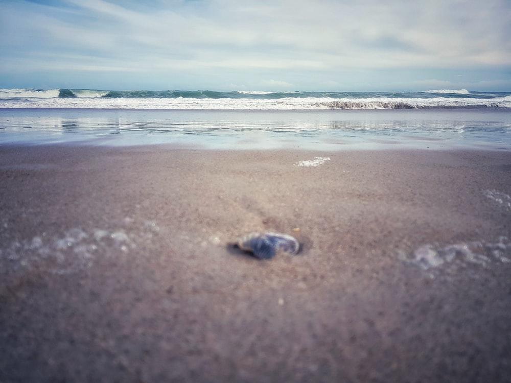 brown sand near ocean