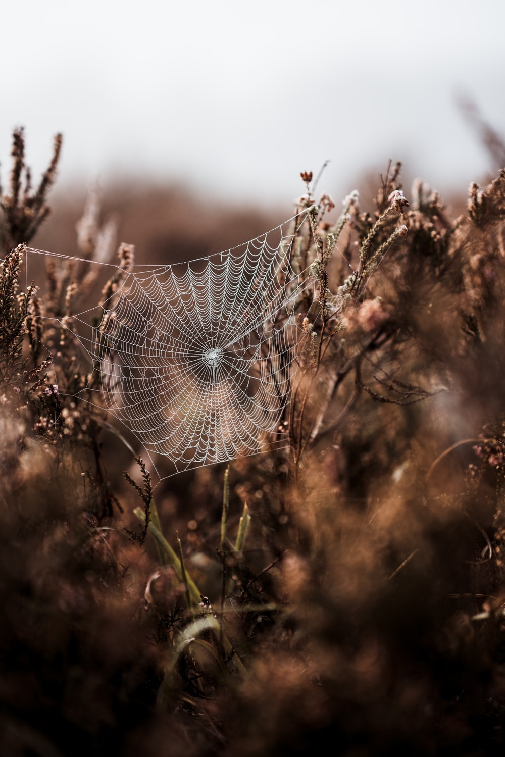 spider web in shallow photo